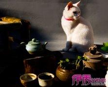 有禅意的家居器皿 风格陶瓷用具推荐